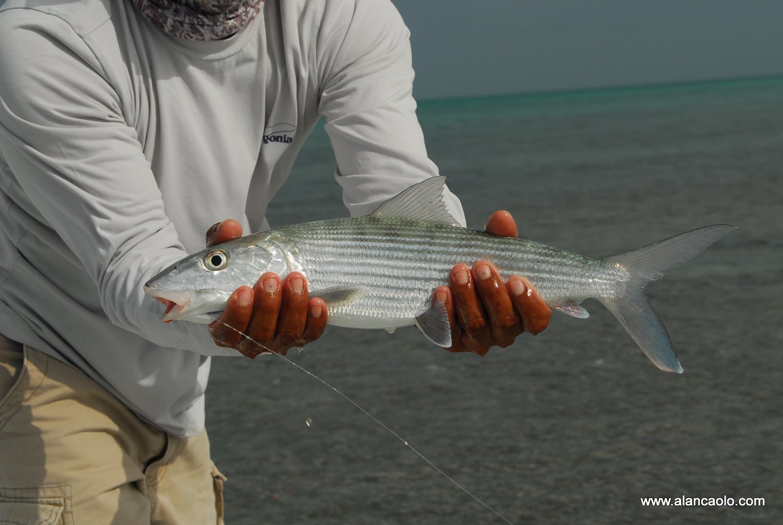fly fishing photography ©2020 alan caolo - image