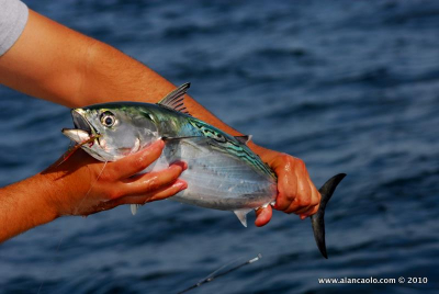 fly fishing photography© 2020 alan caolo