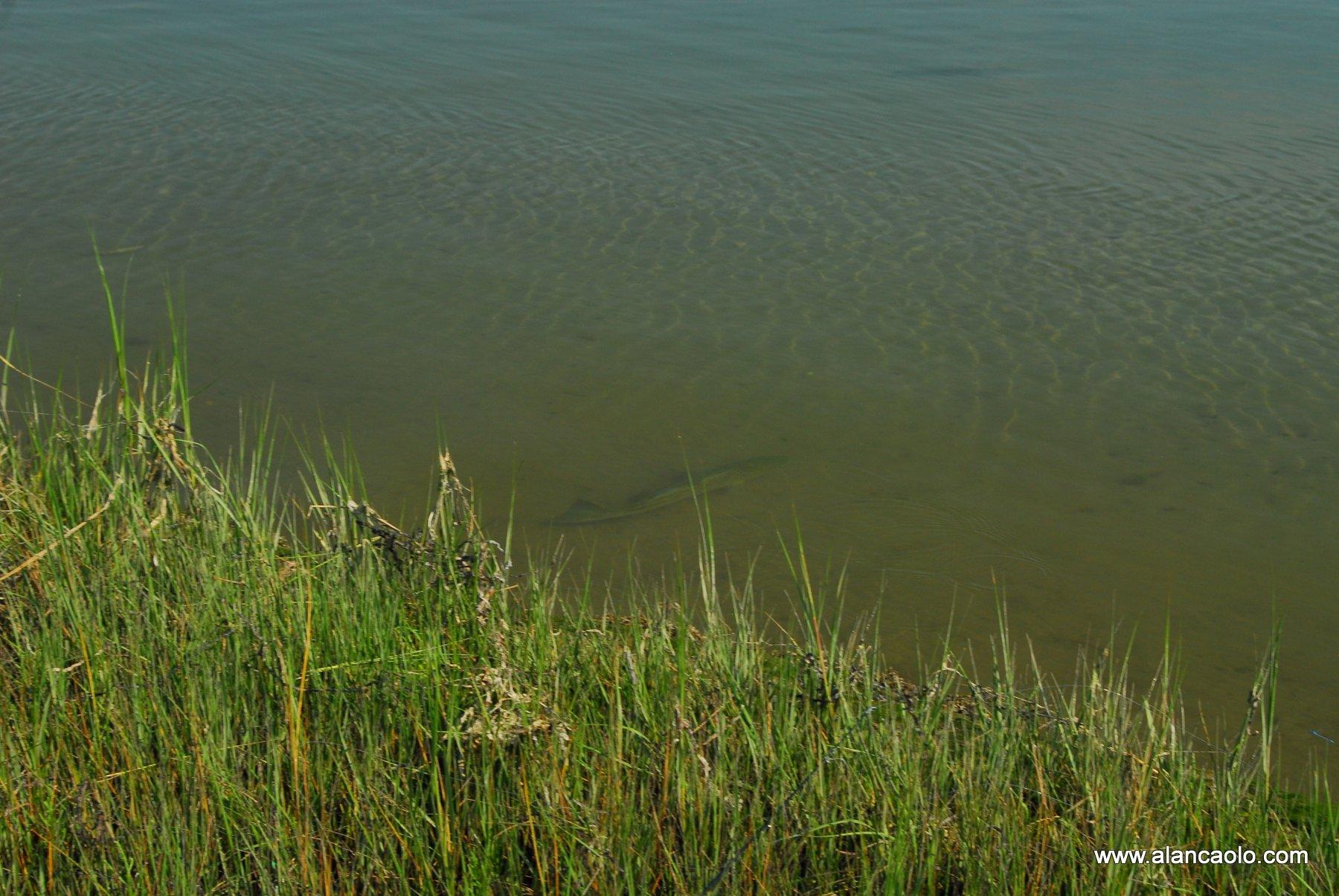 wildlife photography copyright 2020 alan caolo - image